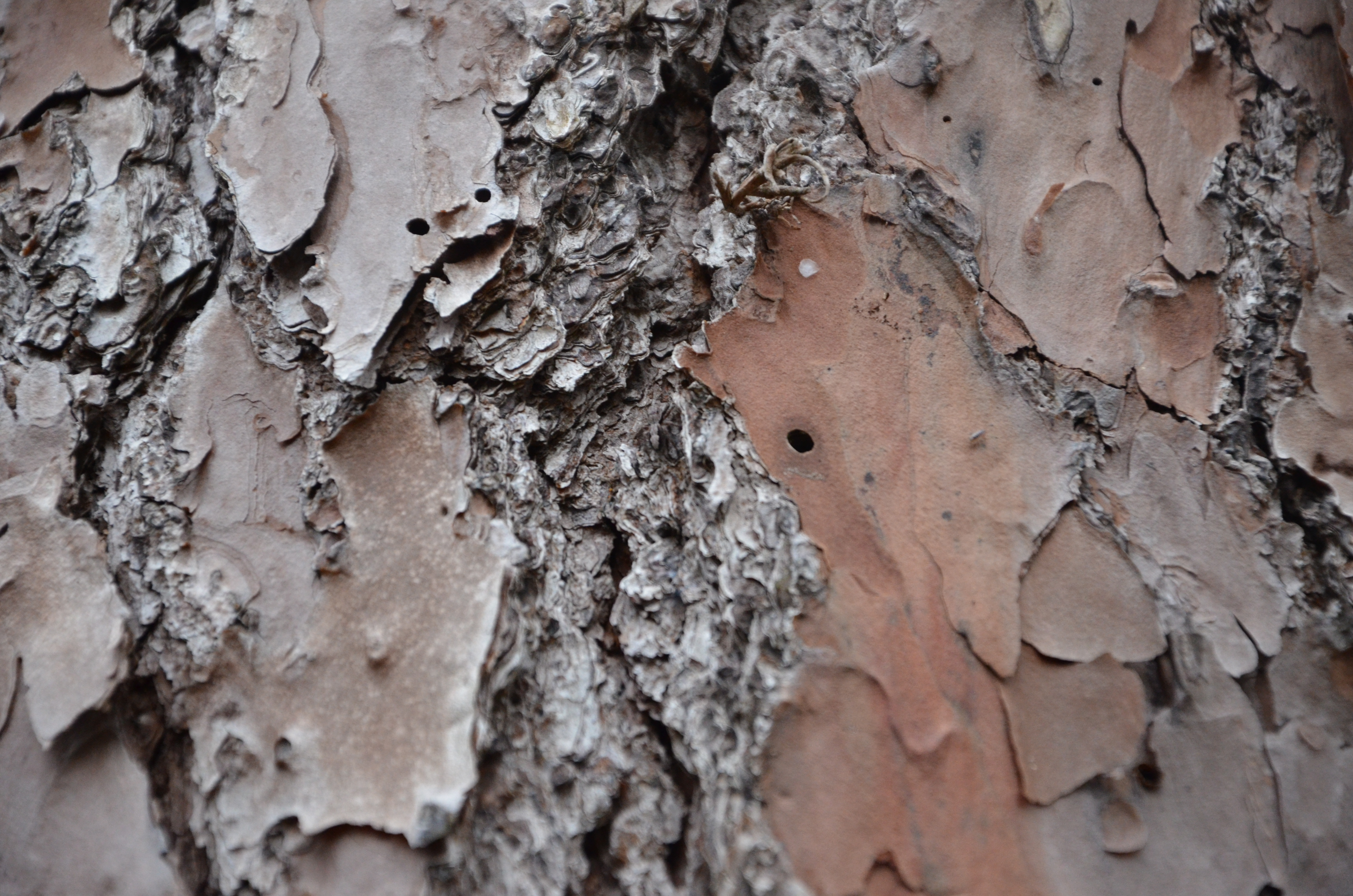 A hidden spider in the bark of a tree.